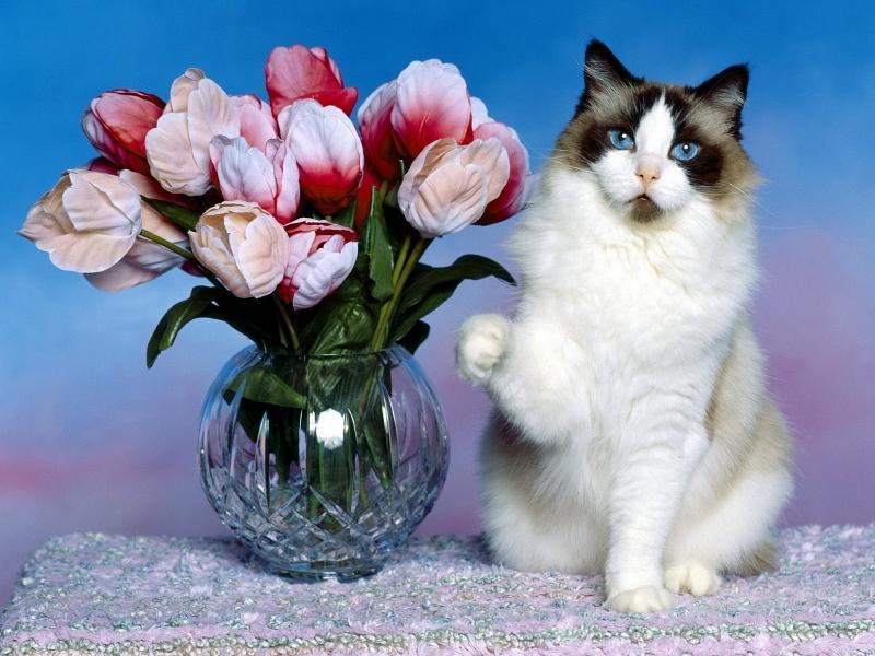 Cat _30_.jpg
