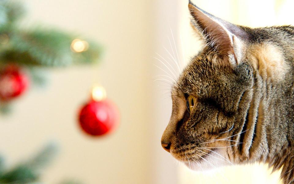 christmas-cat-07_niclindh_ncsa.jpg