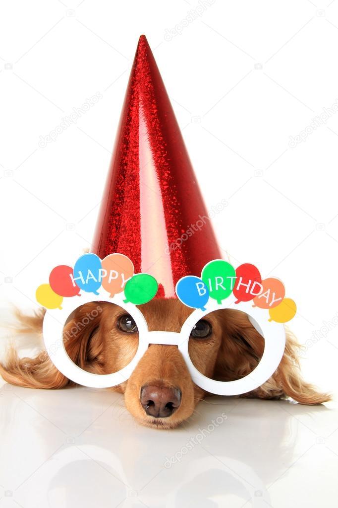 depositphotos_88014324-Happy-birthday-dog.jpg