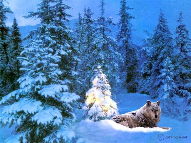 елка-волк.jpg